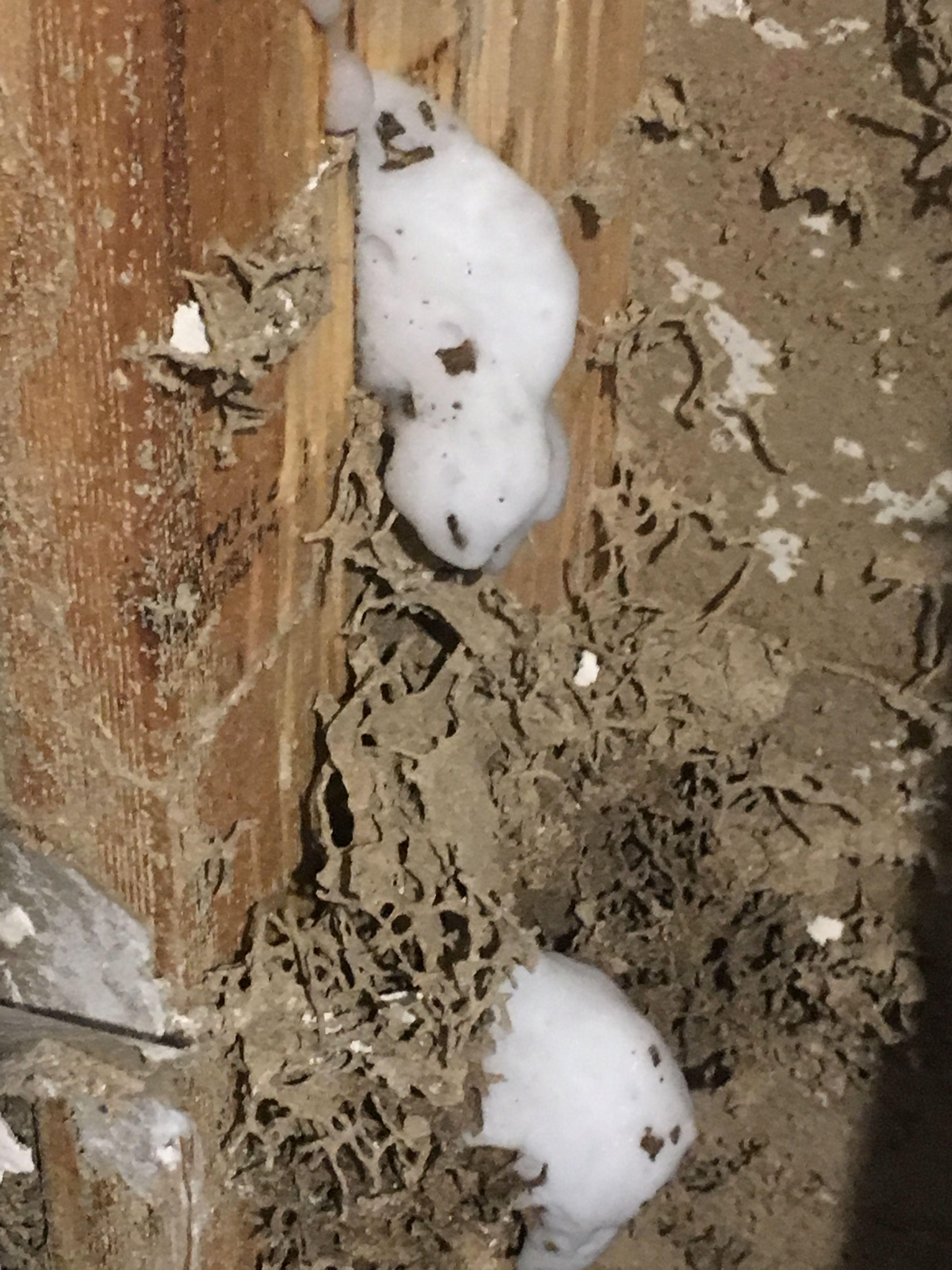 Gallery Bob Gunn Termite Solutions In Brisbane Qld Termites Wood Termites Termite Damage