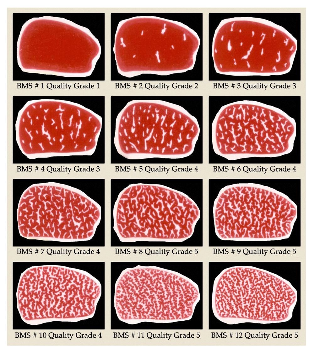 Kobe Beef Meat Quality Score And Marbling Score Board In 2019
