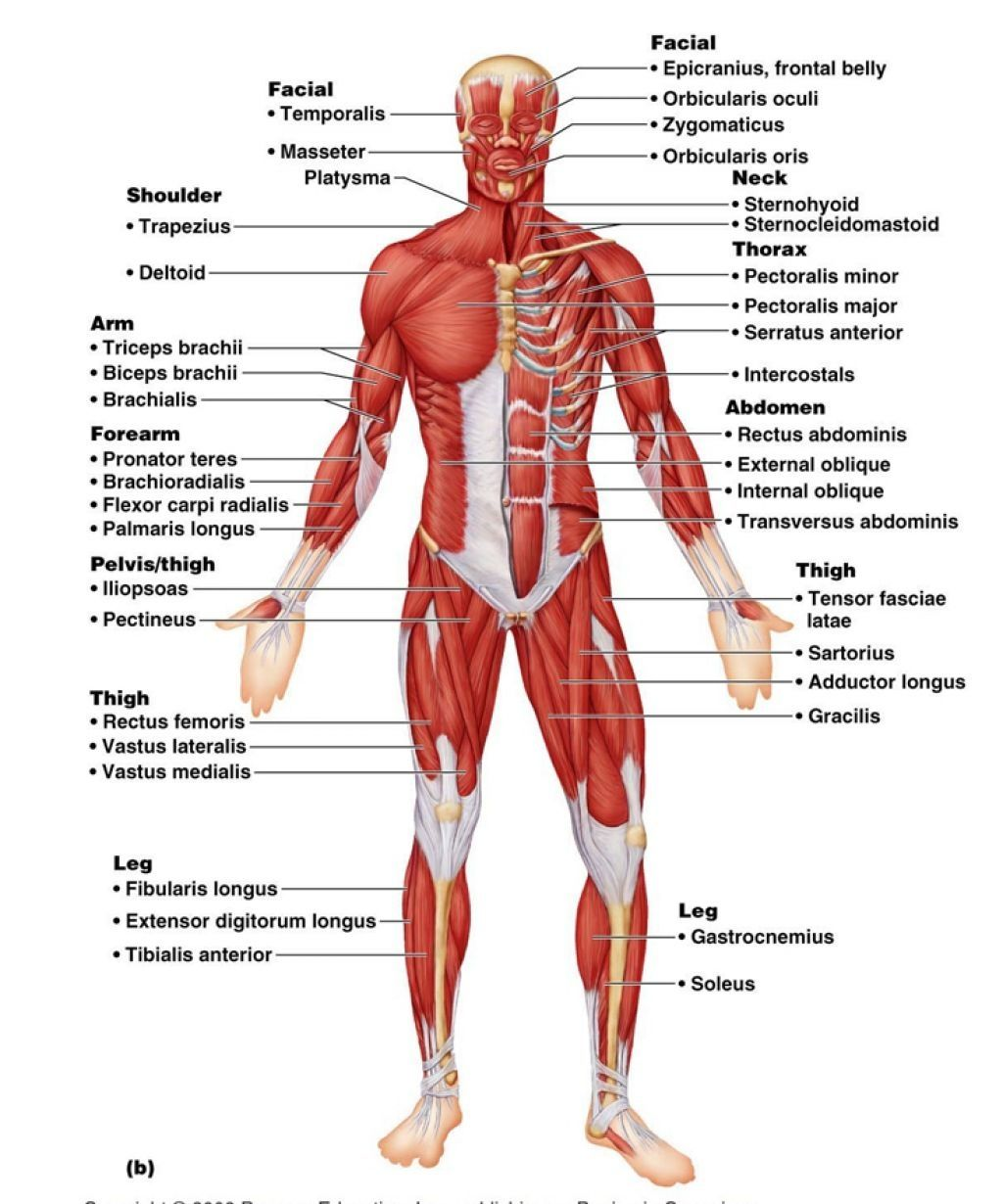 Labeled Human Body Labeled Human Body Detailed Diagram