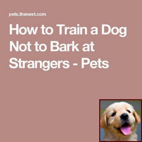 Dog Behavior Understanding And Sniffer Dog Training Courses Near