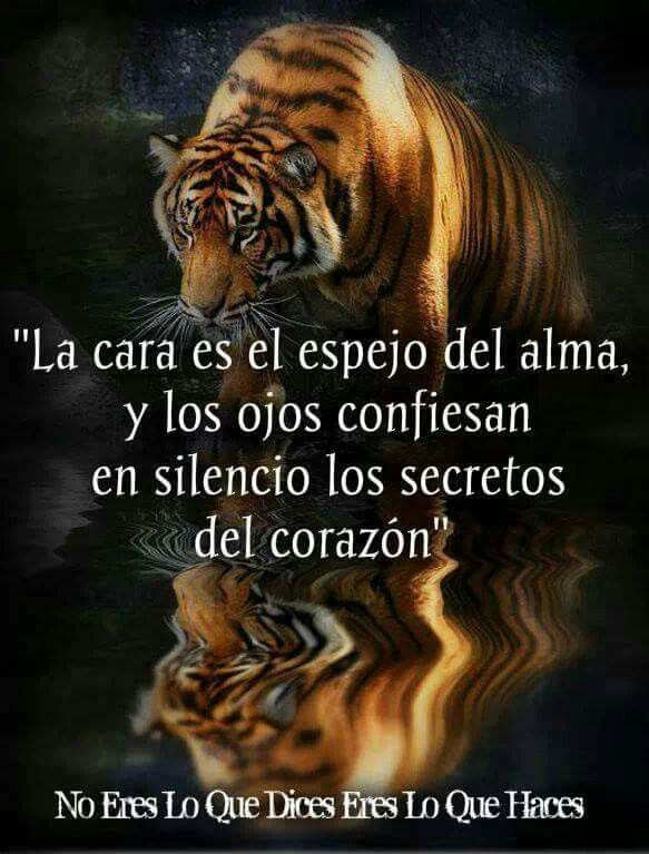 Pin About Tigres Frases Y Fondos Con Frases On Mensajes