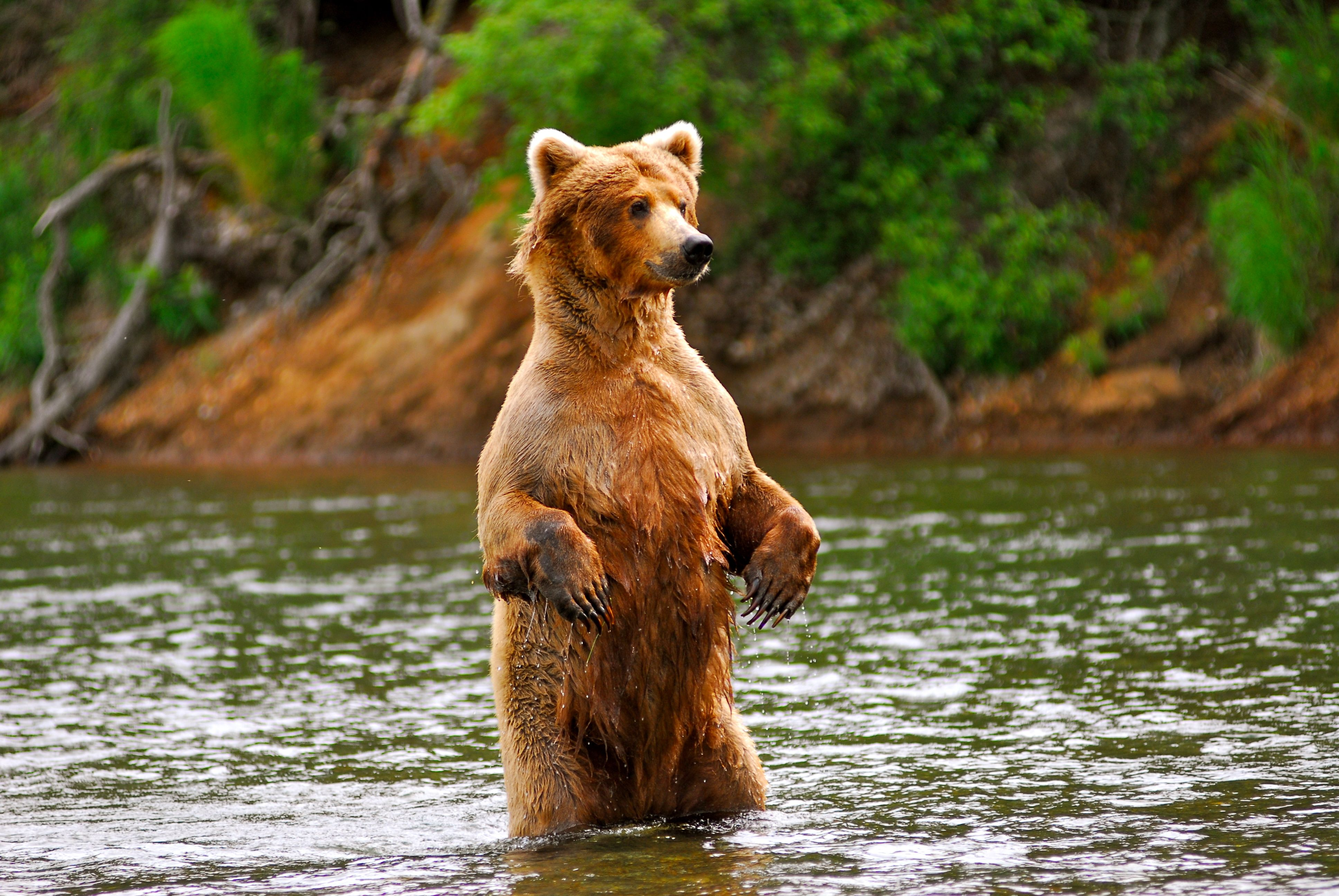 Fly fishing in Alaska with Grizzly Bears I want to do