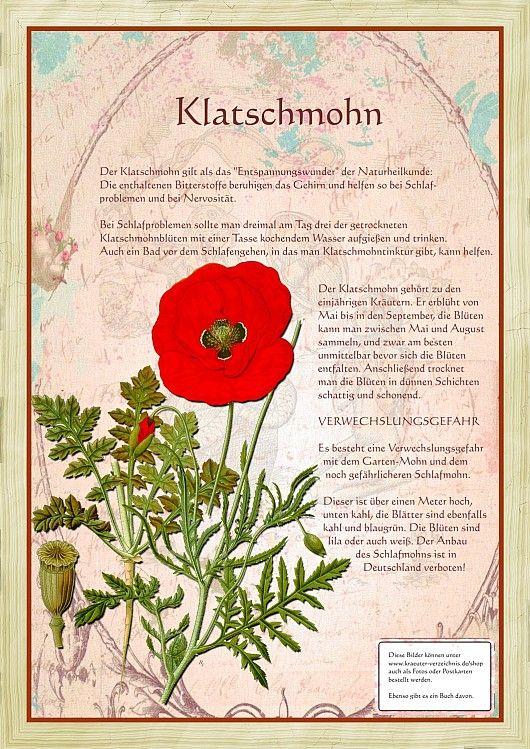 Klatschmohn Krauter Pflanzen Krauter Heilpflanzen
