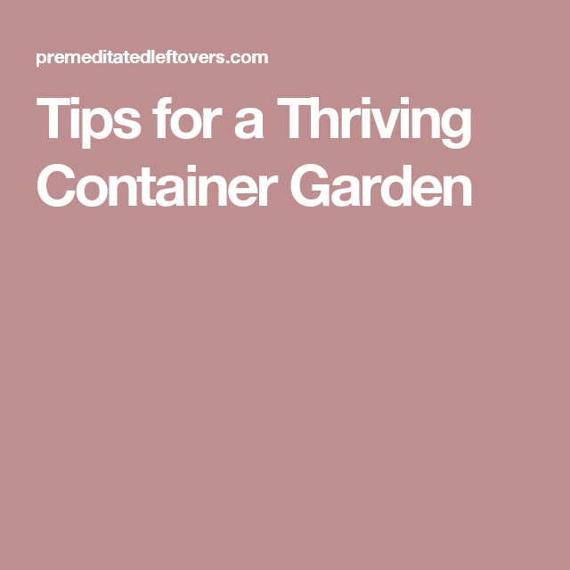 Tips for a Thriving Container Garden