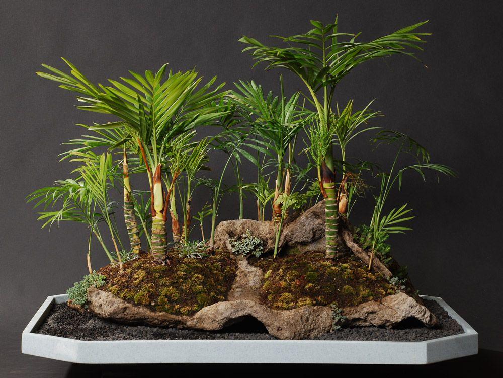 parlor palm indoor bonsai bonsai. Black Bedroom Furniture Sets. Home Design Ideas