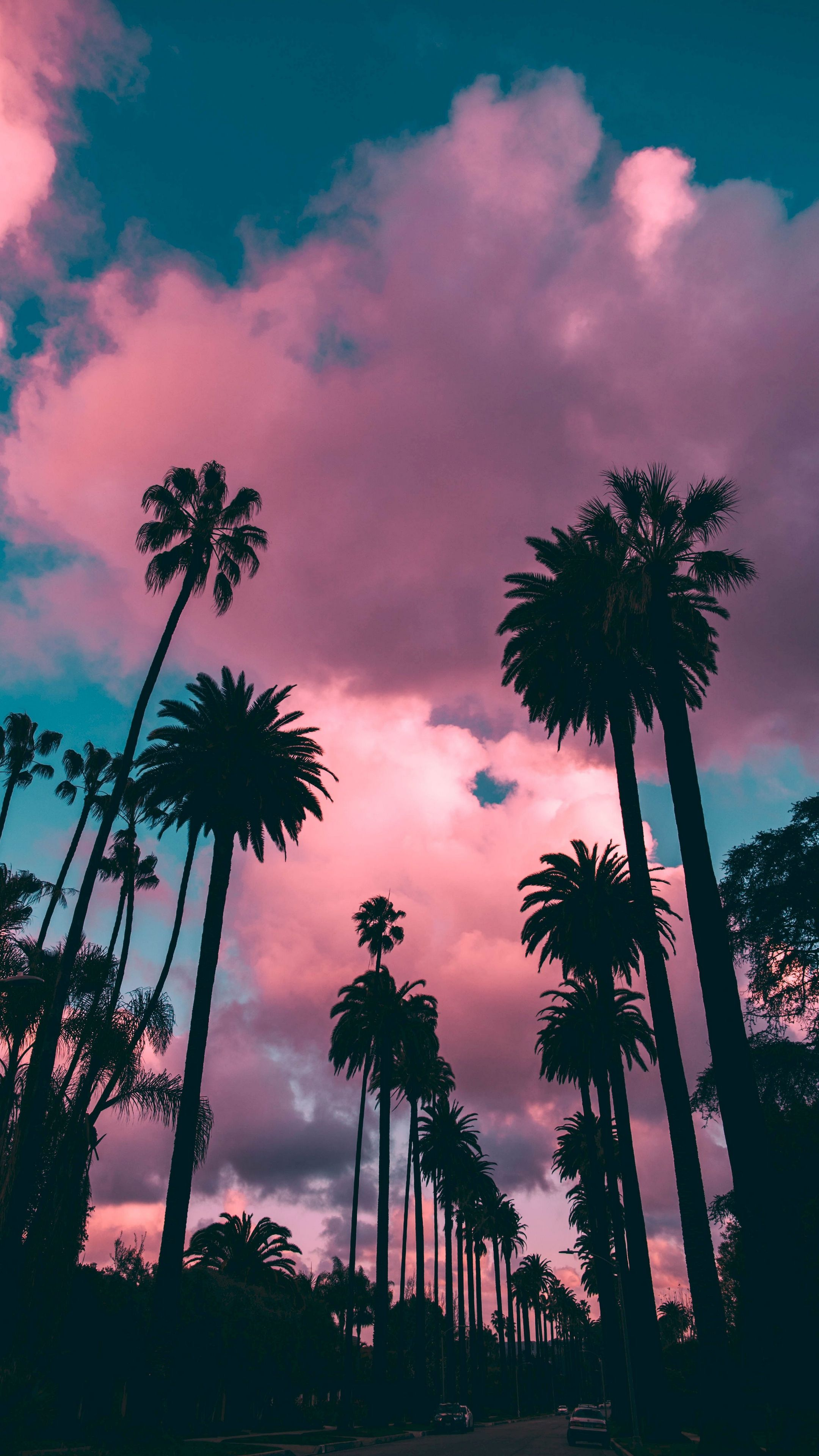 Palm Trees Sky Tropics Trees Wallpaper Palm Trees Wallpaper Palm Tree Background Tree Wallpaper
