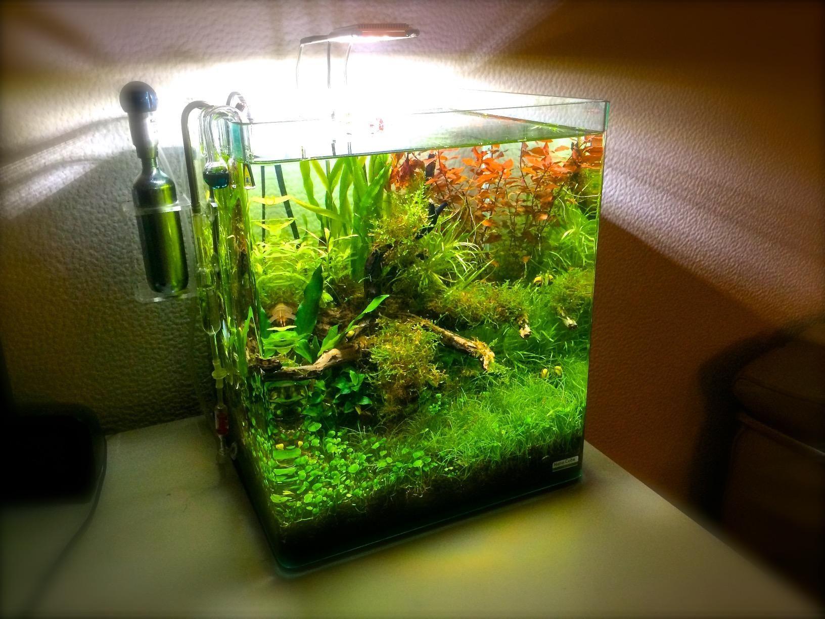 Dennerle 5710 Nano Power-LED 5.0: Amazon.de: Haustier   aquarium ...