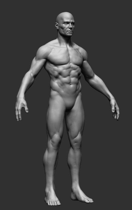 Male Anatomy 3d model- CGStudio | Art tutorials | Pinterest ...