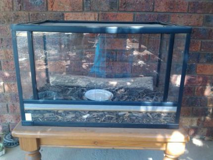 Lizard Tank For Sale With 2 Blue Tongues Reptiles Amphibians