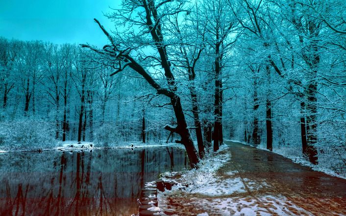 Beautiful Blue Winter Forest In The Evening Wallpaper Winter Wallpaper Forest Wallpaper Winter Pictures