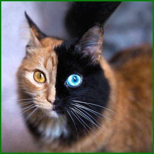 Nama Kucing Korea Jantan Yang Unik Dan Familiar Daftarhewan Com Di 2020 Kucing Binatang Lucu Kucing Cantik