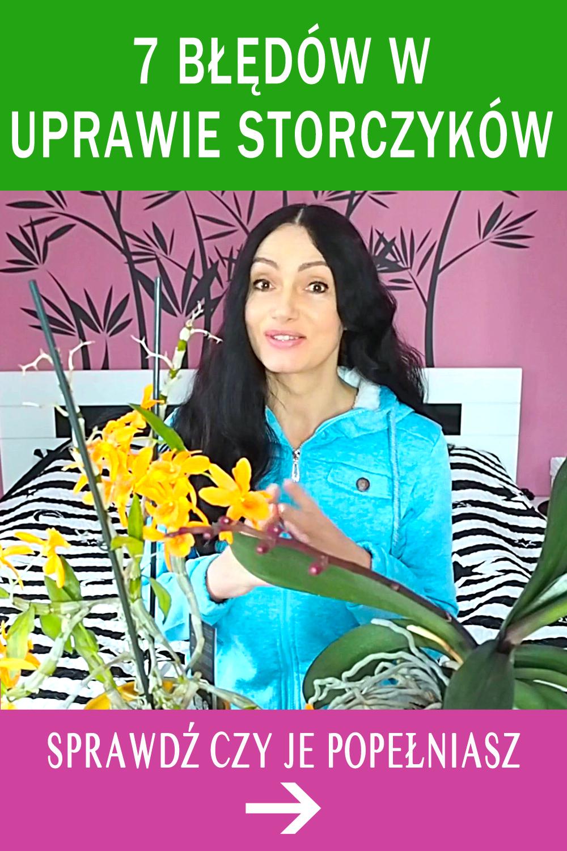 7 Bledow W Uprawie Storczykow Sprawdz Czy Je Popelniasz Flowers Plants Potted Plants