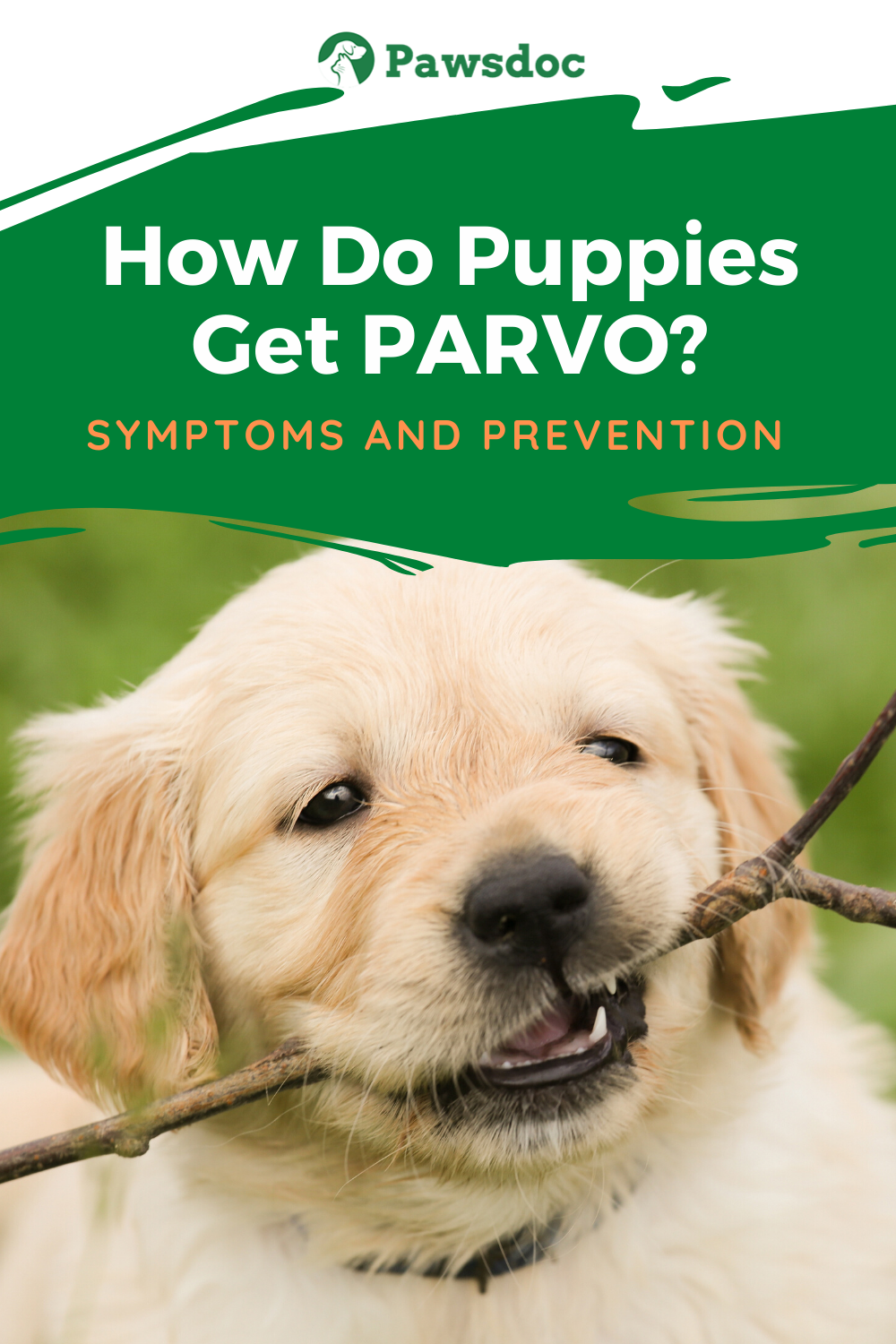 Pin On Dog Tips And Info