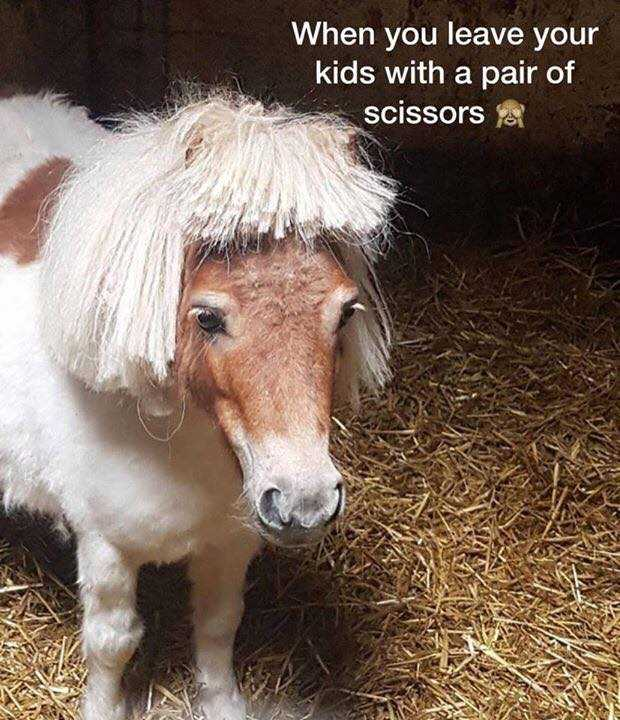 Pin By Virjinia Reyes On The Mane Event Funny Horse Memes Funny Horses Horse Meme
