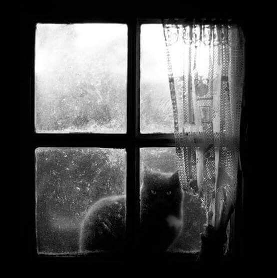 Seb-z  -   Cat at the Window.