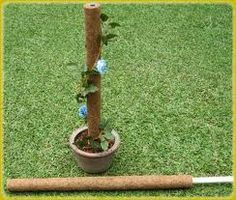 Coir Pole is a plant support and a growing aid manufactured using 100% environment friendly coconut fibers. Widely used in plant nurseries, horticulture farms and indoor and outdoor horticulture decorative.  The high moisture retention capacity of the stick enables the roots of the plant to grip natural organic mattress of coir fiber.