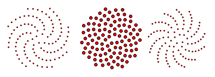The Pattern Of Florets Produced By Vogel S Model Central Image