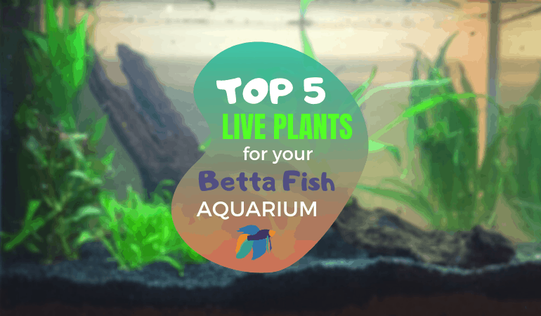 Top 5 Favorite Plants: What are the best plants for a betta fish tank?