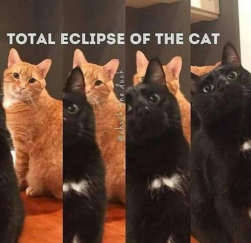 #Cat #Cats #CatMeows: Eclipse Cat kkkkkk #cats #cats_of_instagram #catsminutes #cats #canseidesergato #eclipsecat #miauu https://buff.ly/2NAoSvR https://ift.tt/2LGxjnG - Tiere Blog #cutecreatures
