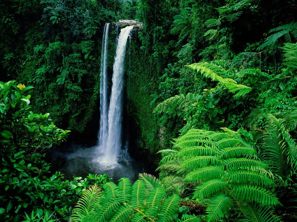 Amazon Rainforest, Feel the Rainfall of Leaves   Waterfalls, The ...