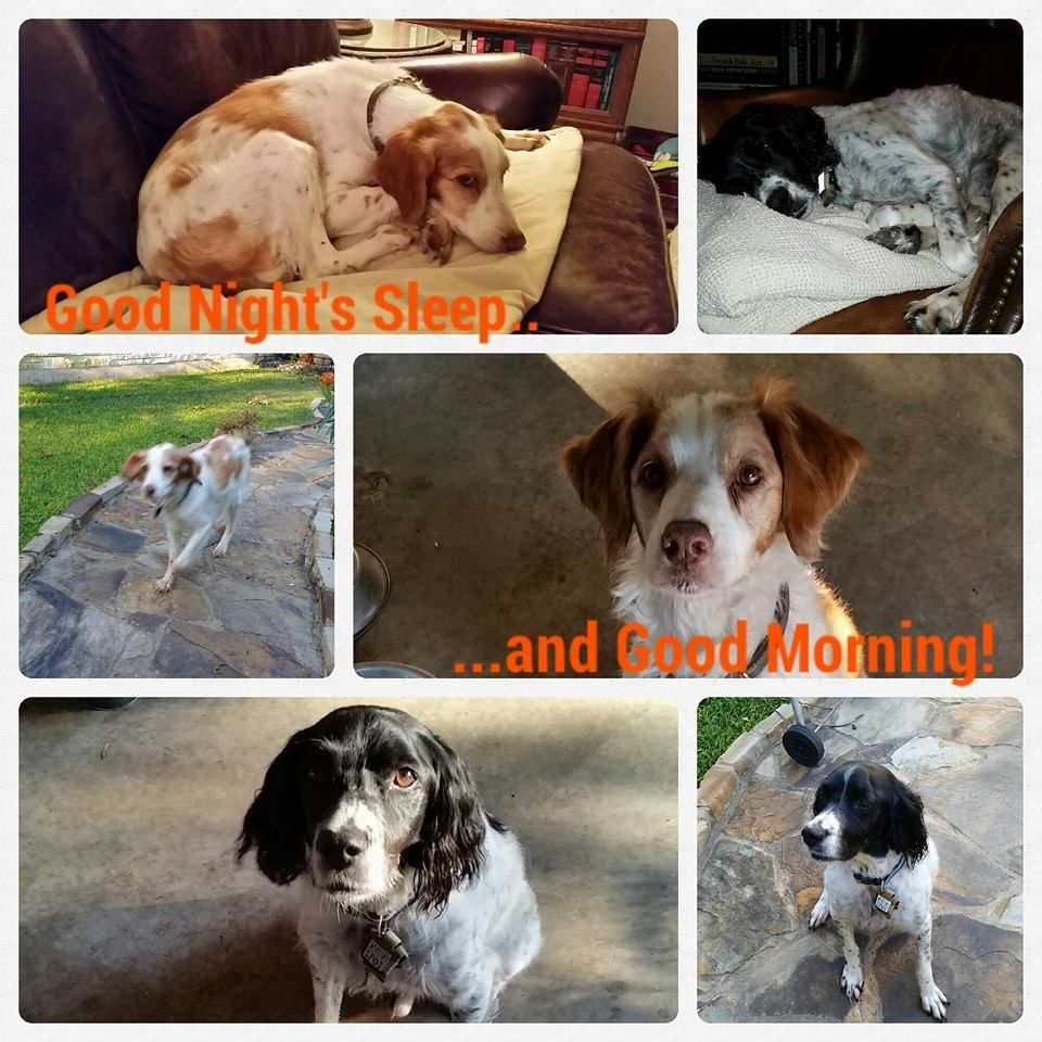 Buck And Mattie Submitted By Sitter Karen L Vip Pets We Love Our Clients