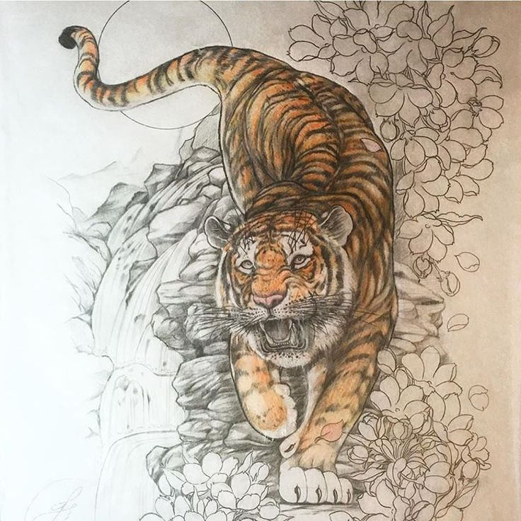 Japanese tiger tattoo sketch