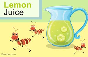 Home Remedies To Get Rid Of Ants  Lemon Juice