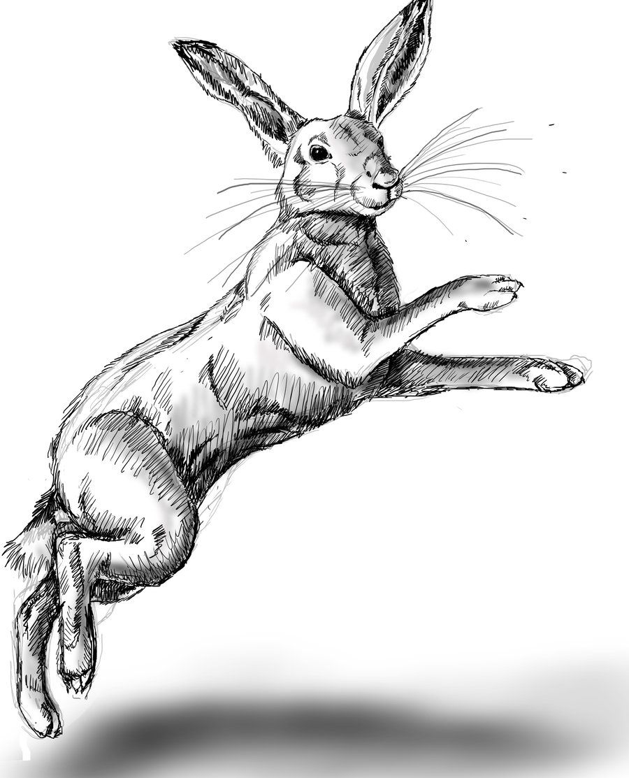 hare wip 1 by Tianithen on DeviantArt | Boxer Tattoo Hare | Pinterest