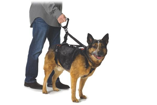 My Favorite Harnesses For Handicapped Dogs   Hip dysplasia, Dog and
