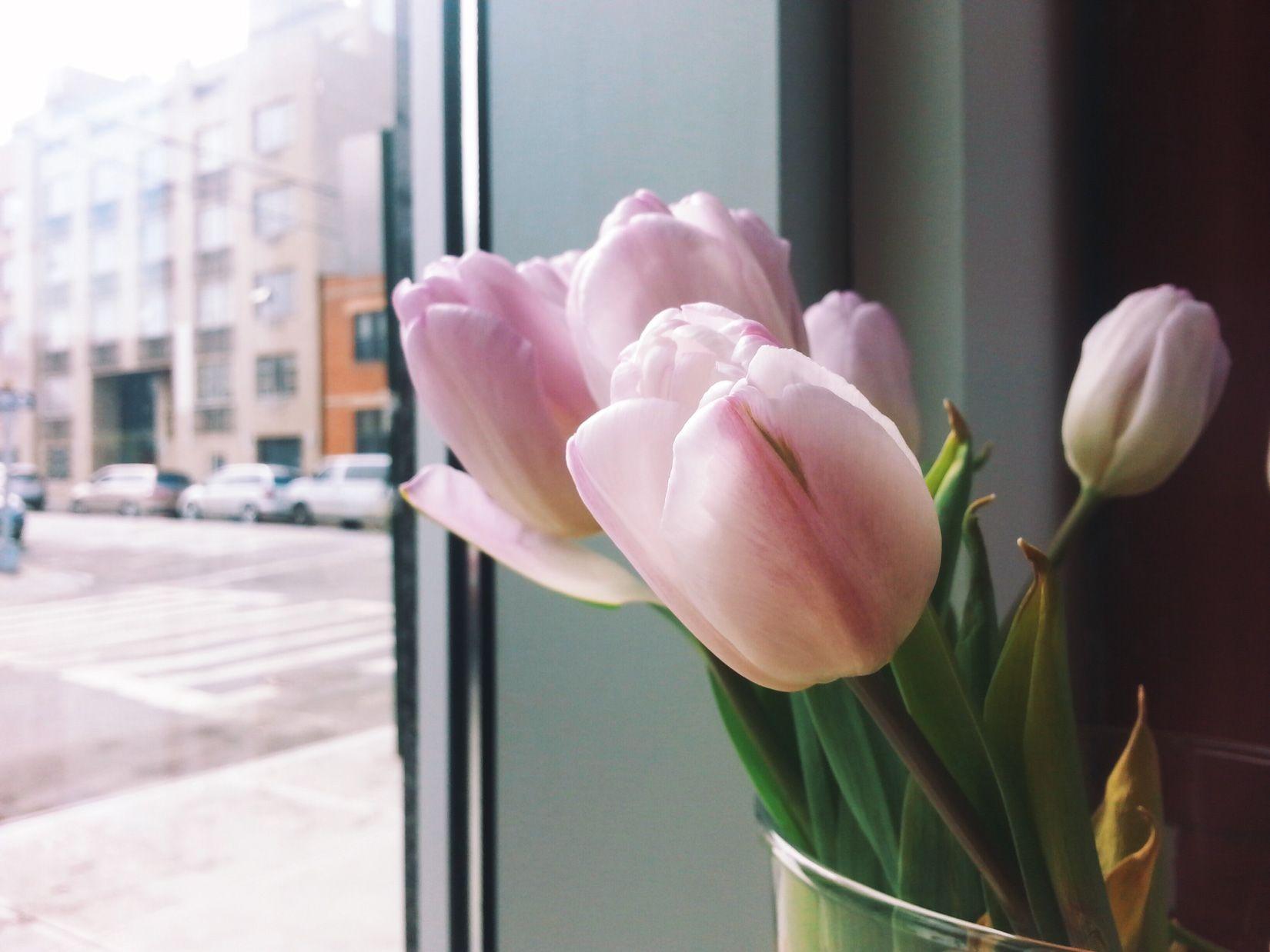 Tulips Cover letter for resume, Job hunting, Job
