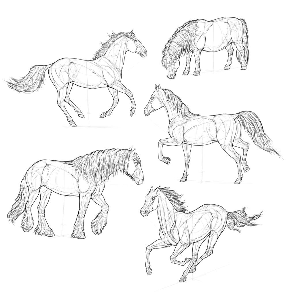How to draw horses step by step 9