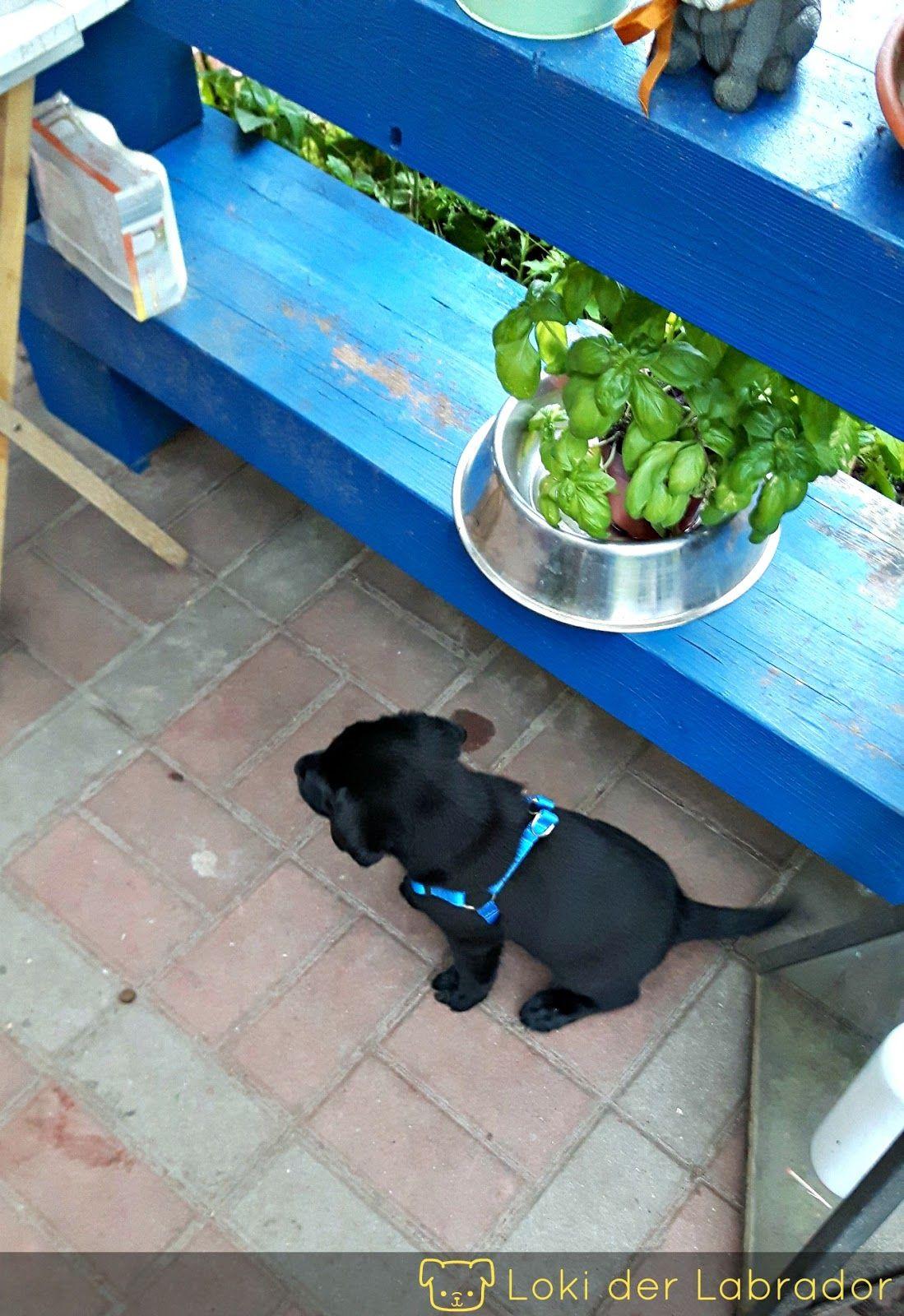 Beisshemmung So Gewohnst Du Deinem Welpen Das Beissen Ab Aufgeregter Hund Welpen Hunde