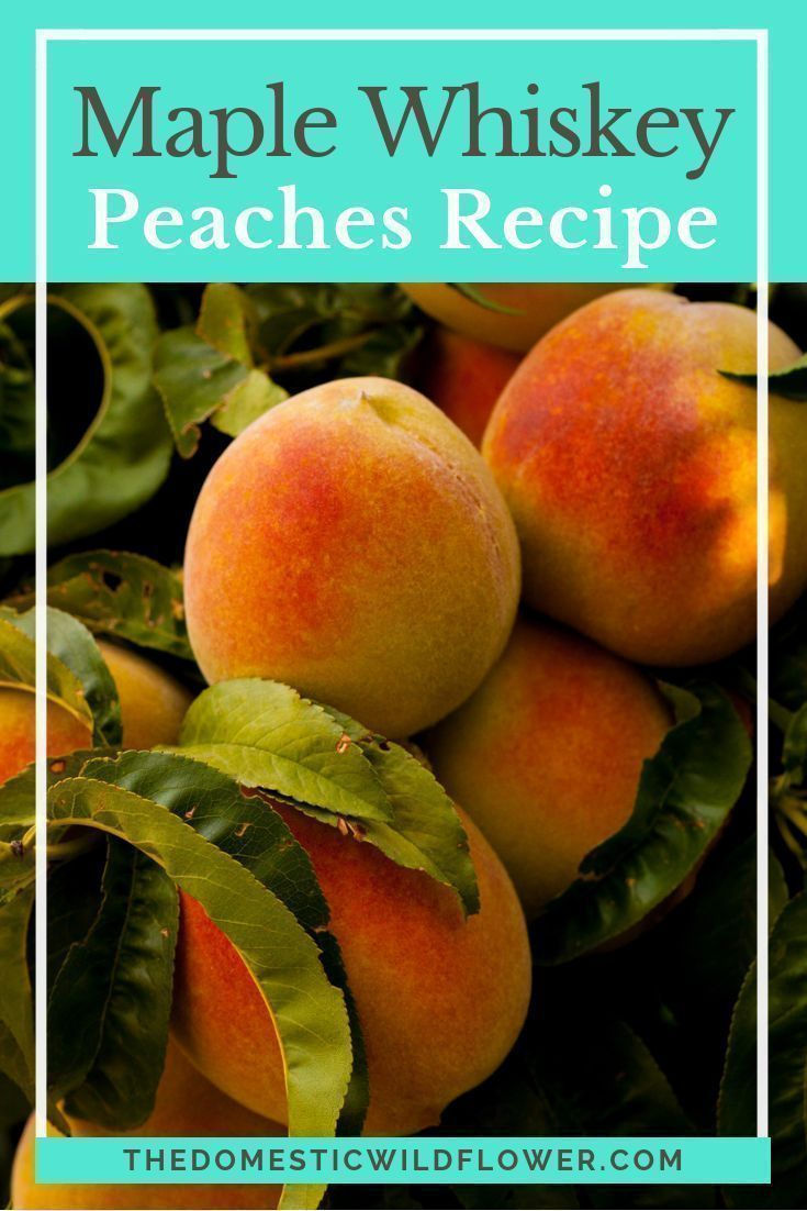 Maple Whiskey Peaches #peachcobblercheesecakeinajar This post will show you step by step how to can peaches in a vanilla syrup with a splash of whiskey. The resulting preserve can be eaten out of the jar plain, are perfect on top of a cheesecake, waffles, or ice cream, or are a flavorful alternative to plain ol' peaches in a pie or crisp. Read on for the tutorial! #peachcobblercheesecakeinajar Maple Whiskey Peaches #peachcobblercheesecakeinajar This post will show you step by step how to can p #peachcobblercheesecakeinajar