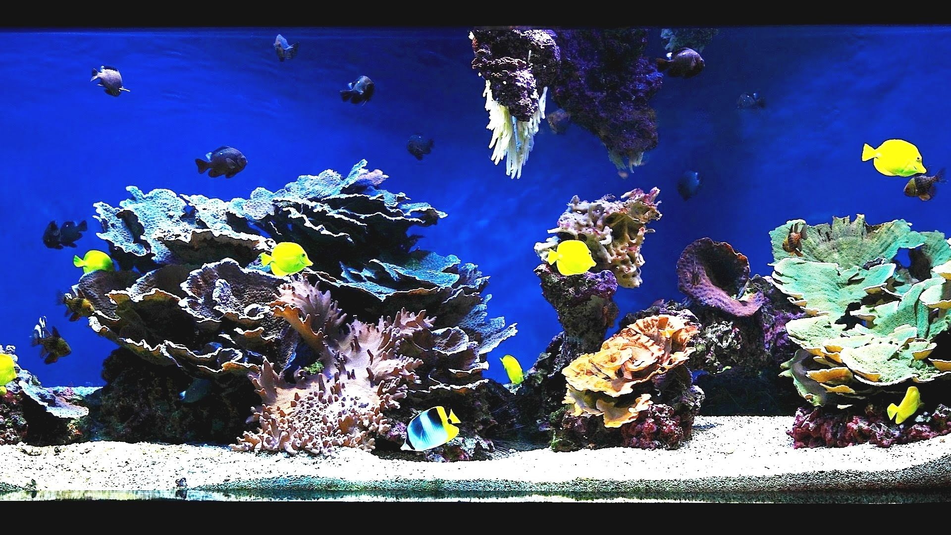 Marine Aquascaping Techniques - Aquascape Ideas