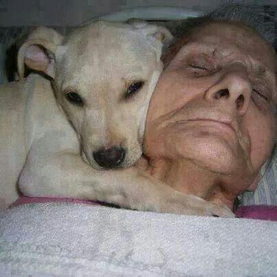 Amor leal