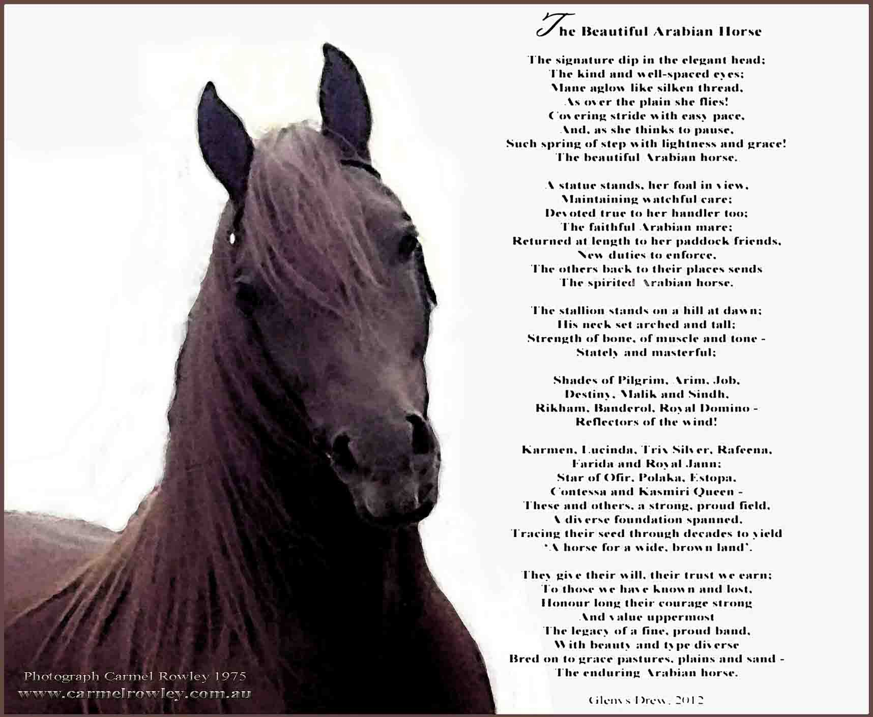 Horse Poems And Quotes Horse Quotes Pinterest Horse Poems