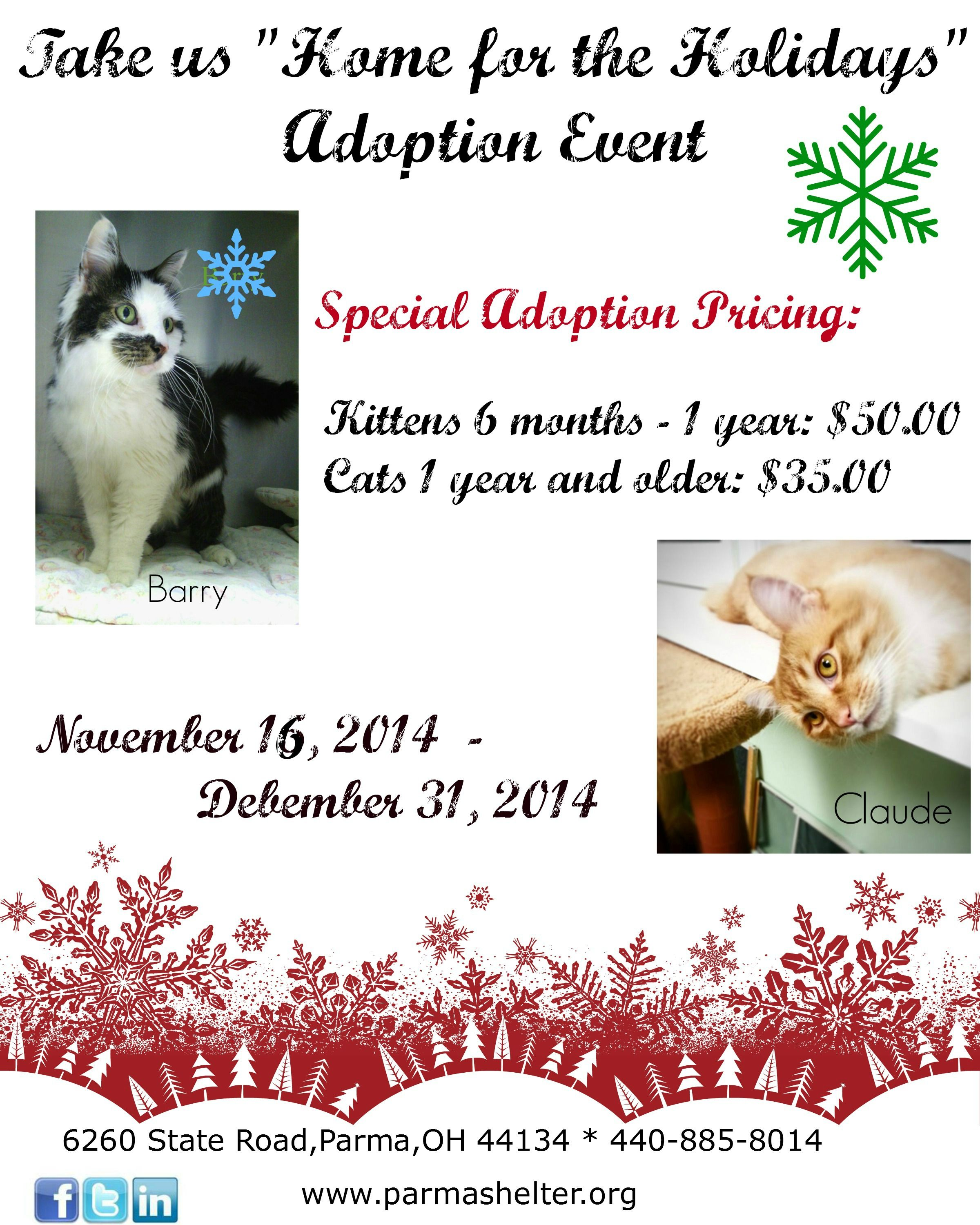 Home For The Holidays At The Parma Animal Shelter Cats And Kittens Have Reduced Adoption Fees From November 16