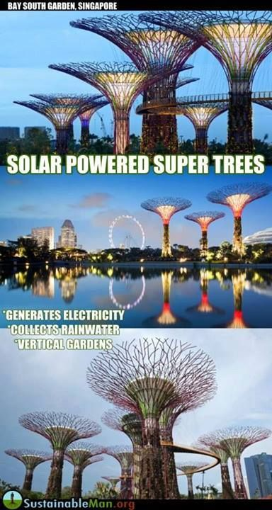 Solar-powered \'supertrees\' at Singapore\'s Gardens by the Bay | Solar ...