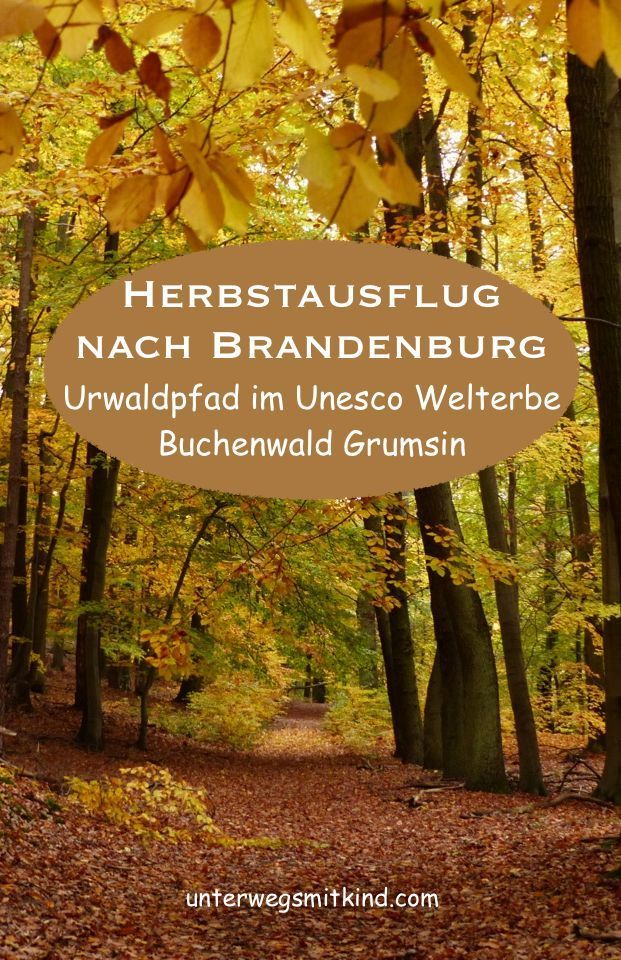 Der Herbst trumpft im Norden Brandenburgs voll auf. In der Uckermark kann man dann nicht nur Kraniche beobachten, sondern auf dem Urwaldpfad auch den Unesco Welterbe Buchenwald Grumsin erkunden - einer der letzten Urwälder Europas. #waldbaden #vogelbeobachtung #kraniche #herbst #ausflug #reisenmitkindern #natur #reisen #urlaubmitkindern #urlaub #urwald #deutschlandreise #reiseziele #familienausflug