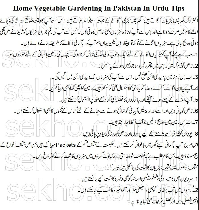 Home Vegetable Gardening In Pakistan In Urdu Tips