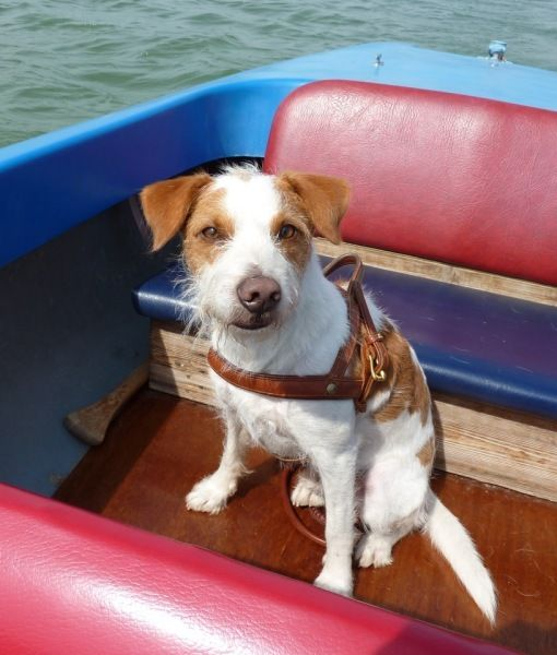 """""""When can I jump in for a swim?""""  #Dogs on Boats 