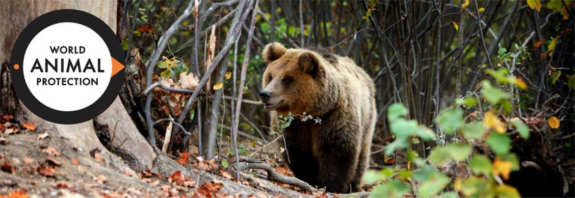 Sochi Bears - World Animal Protection | World animal protection ...
