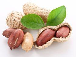 Erdnusse Anbauen So Wird S Gemacht Erdnusse Pflanzen Die Peanuts Lebensmittel Essen