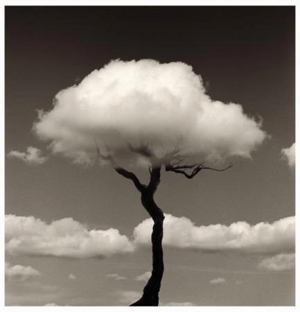 wolkenboom