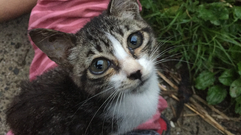 Kittens Watery Eyes