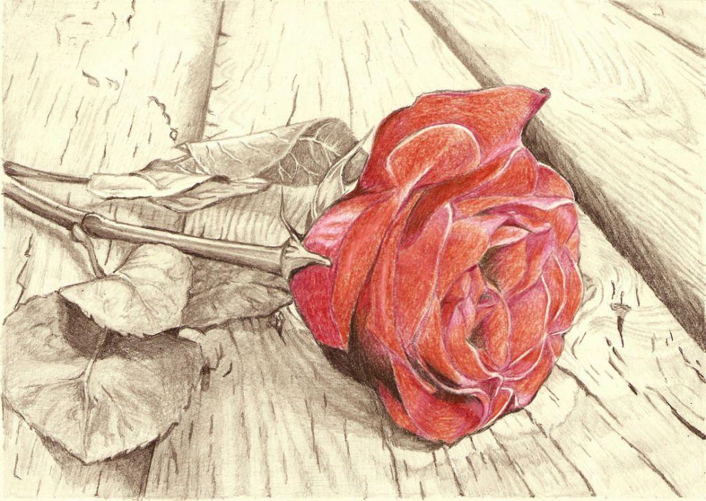 rosas al lapiz  Dibujos De Rosas a Lapiz  dibujo a lapiz  Pinterest