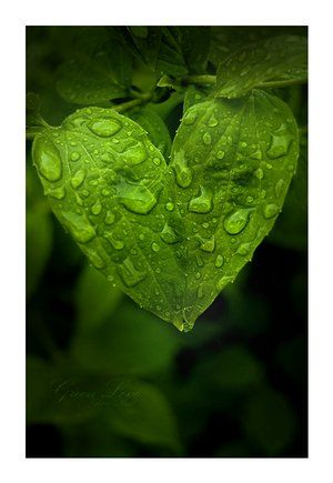 How To Have A Green Romance Heart In Nature Heart Art Heart Shapes