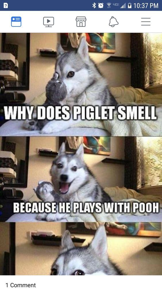 Best Funny Puns 27+ Hilarious Funny Jokes animals and pets 27+ Hilarious Funny Jokes animals and pets