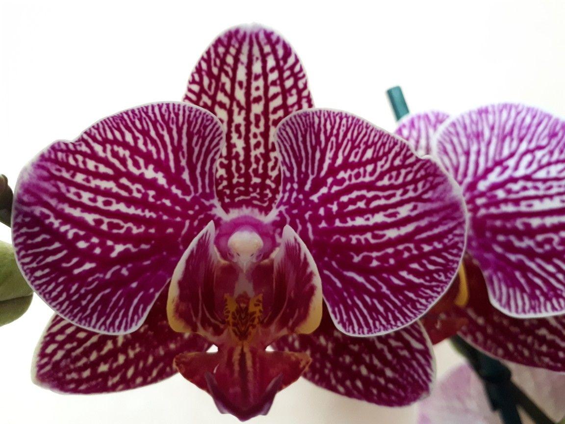 Pin by herney on propagación de orquideas pinterest orchid