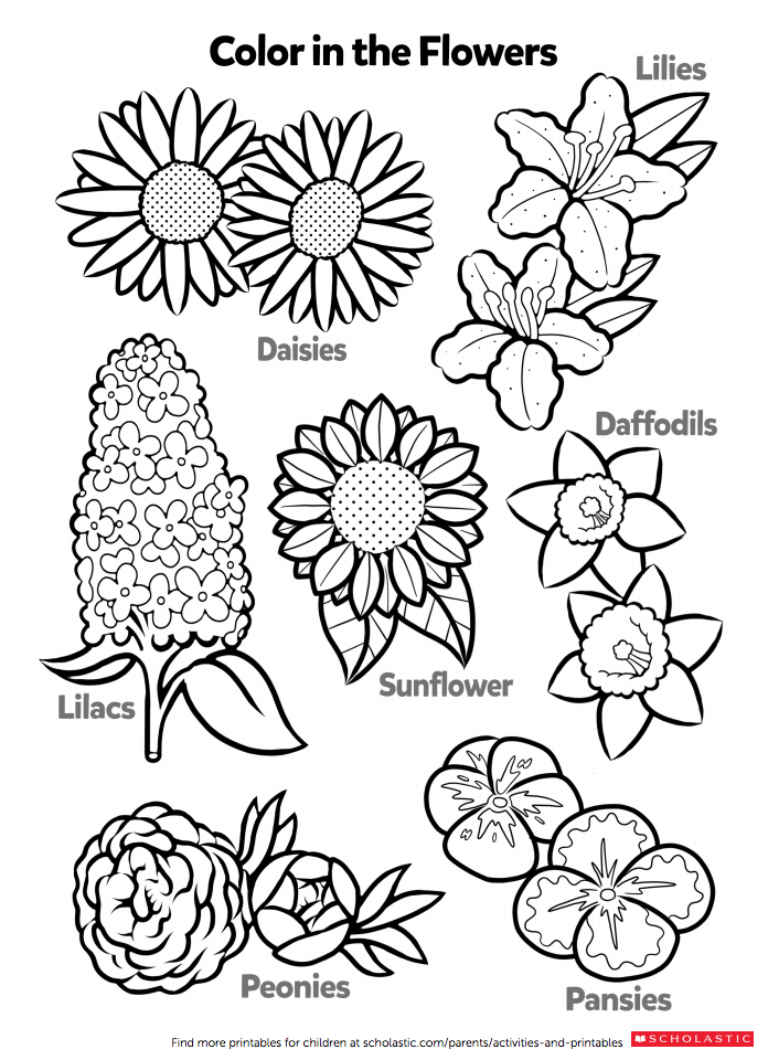 Wake up and smell the flowers with your child (then color